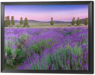 Obraz w Ramie Zachód słońca nad polem letnich lavender w Tihany, Węgry