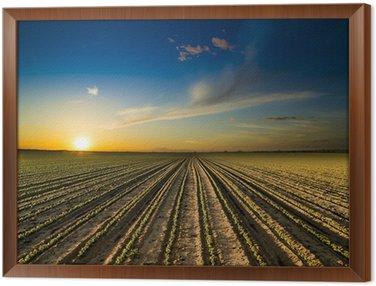 Obraz w Ramie Zachód słońca nad zielonym polu uprawy soi fasoli