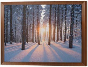 Obraz w Ramie Zachód słońca w lesie w okresie zimowym