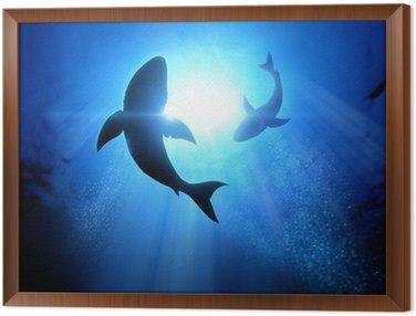 Obraz w Ramie Żarłaczy białych