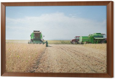Obraz w Ramie Zbioru ziarna soi