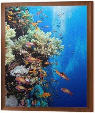Obraz w Ramie Zdjęcie kolonii koralowców