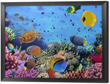 Obraz w Ramie Zdjęcie z koralowców kolonii
