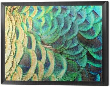 Obraz w Ramie Zielone pawie pióra