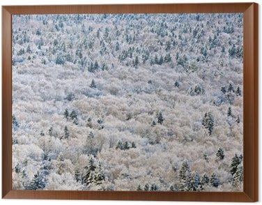 Obraz w Ramie Zima leśnych w regionie Twer, Rosja.