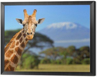 Obraz w Ramie Żyrafa przed Kilimanjaro góry