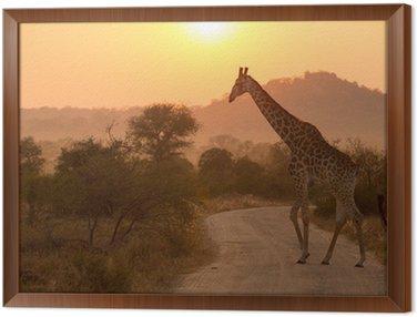 Obraz w Ramie Żyrafa w Sunrise Park Narodowy Krugera