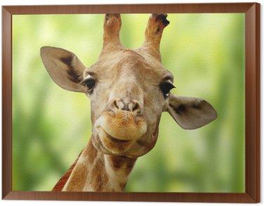 Obraz w Ramie Żyrafa z przodu zielony krajobraz