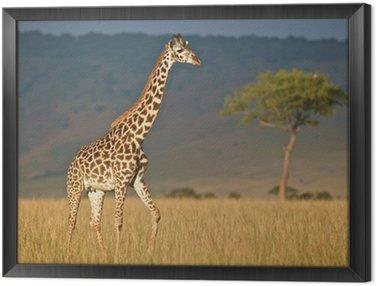 Obraz w Ramie Żyrafa