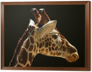 Obraz w Ramie Żyrafy