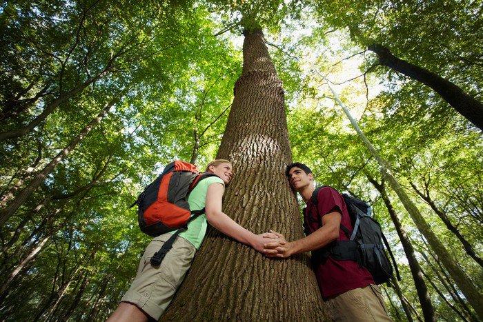 Obraz na Płótnie Ochrona środowiska: młodzi turyści obejmujące duże drzewo - Ekologia