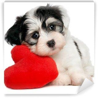 Papier Peint Vinyle Amoureux Valentine Bichon Havanais chiot avec un coeur rouge