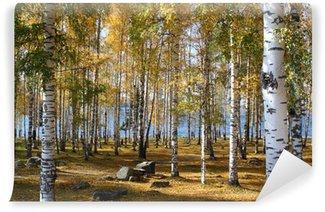 Papier Peint Autocollant Forêt de bouleaux en automne