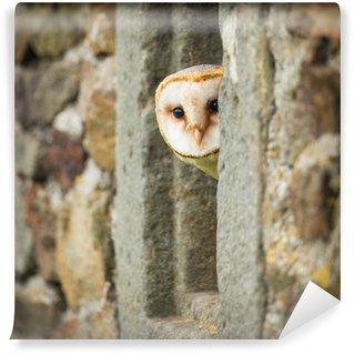 Papier Peint Vinyle Barn Owl oiseau