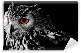 Papier Peint Vinyle Bengali Eagle Owl (Vous pouvez bengalensis)