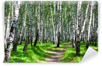 Papier Peint Vinyle Chemin dans une forêt de bouleaux