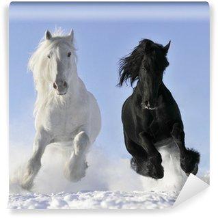 Papier Peint Vinyle Cheval blanc et noir