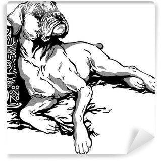 Papier Peint Vinyle Chien boxer blanc noir