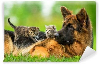 Papier Peint Vinyle Chien de berger allemand avec deux petits chatons