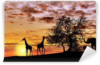 Papier Peint Vinyle Coucher de soleil africain
