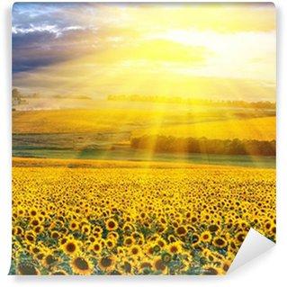 Papier Peint Vinyle Coucher de soleil sur le champ