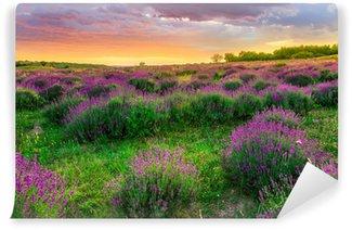 Papier Peint Vinyle Coucher de soleil sur un champ de lavande en été en Tihany, Hongrie