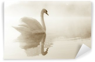 Papier Peint Vinyle Cygne tuberculé Cygnus olor glisse à travers un brouillard couvrait le lac à l'aube