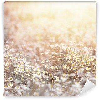 Papier Peint Vinyle Daisy prairie