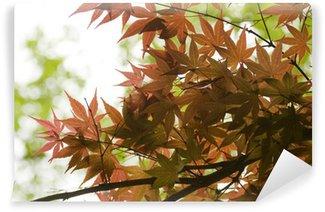 Papier Peint Vinyle Erable japonais
