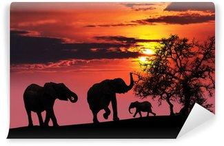 Papier Peint Vinyle Famille d'éléphants au coucher du soleil