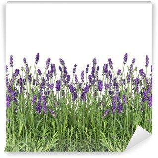 Papier Peint Vinyle Fleurs de lavande isolées sur blanc