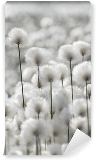 Papier Peint Vinyle Floraison Herbe de coton