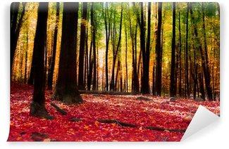 Papier Peint Vinyle Forêt en automne avec la lumière d'or