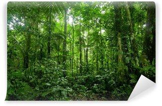 Papier Peint Vinyle Forêt tropicale Paysage, Amazon
