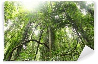 Papier Peint Vinyle Forêt tropicale