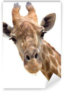 Papier Peint Vinyle Giraffe close-up