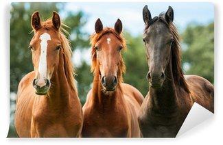 Papier Peint Vinyle Groupe de trois jeunes chevaux sur le pâturage
