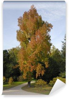 Papier Peint Vinyle Herbststimmung im Schlosspark des Schlosses Favorite bei Rastatt