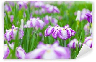 Papier Peint Vinyle Iris japonais
