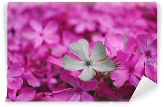 Papier Peint Vinyle Kwiat