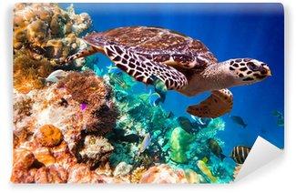 Papier Peint Vinyle La tortue imbriquée (Eretmochelys imbricata)