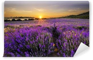 Papier Peint Lavable Coucher de soleil sur un champ de lavande