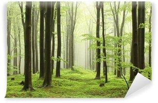 Papier Peint Lavable Forêt de hêtres au printemps dans les montagnes