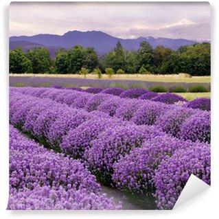 Papier Peint Vinyle Lavender Farm à Sequim, Washington, USA