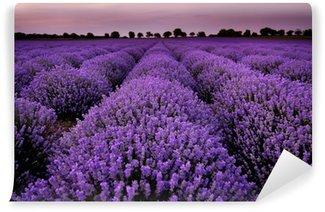 Papier Peint Vinyle Les champs de lavande au coucher du soleil