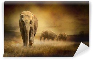 Papier Peint Vinyle Les éléphants au coucher du soleil
