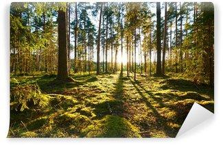 Papier Peint Vinyle Lever du soleil dans la forêt de pins