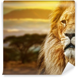 Papier Peint Vinyle Lion portrait sur fond de savane et le Kilimandjaro