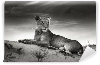 Papier Peint Vinyle Lionne sur la dune du désert
