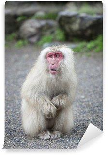 Papier Peint Vinyle Macaque japonais